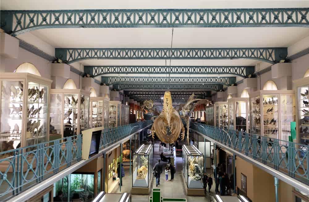 Que voir que faire depuis la gare de Lille : le musée d'histoire naturelle © voyagerentrain.fr